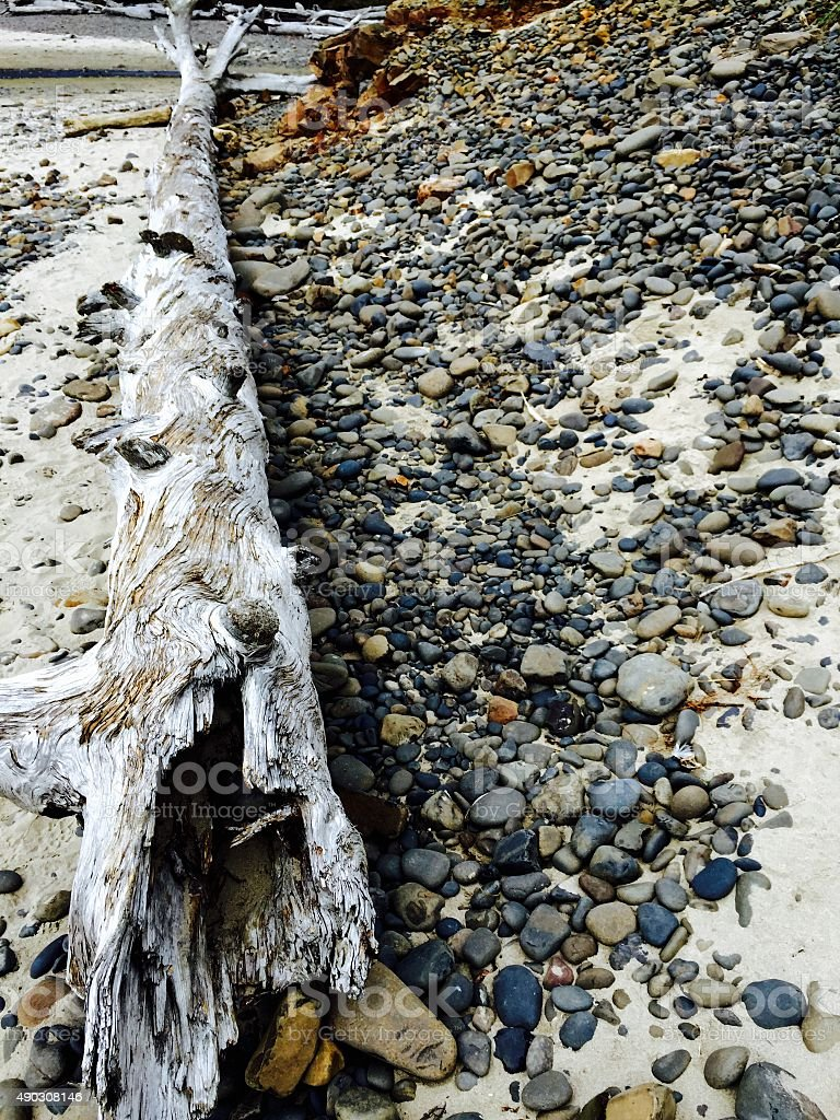 Fallen tree on beach with rocks royalty-free stock photo