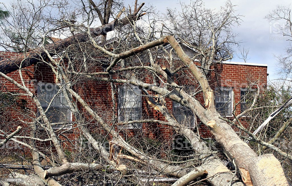 Fallen Tree on Brick House royalty-free stock photo