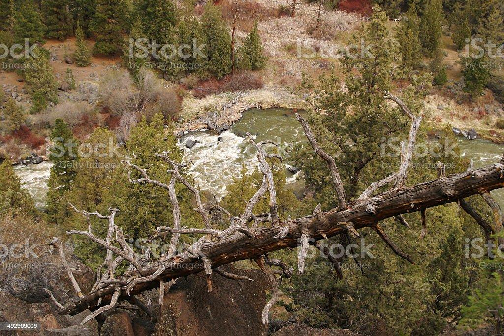 Fallen Tree with River Below stock photo