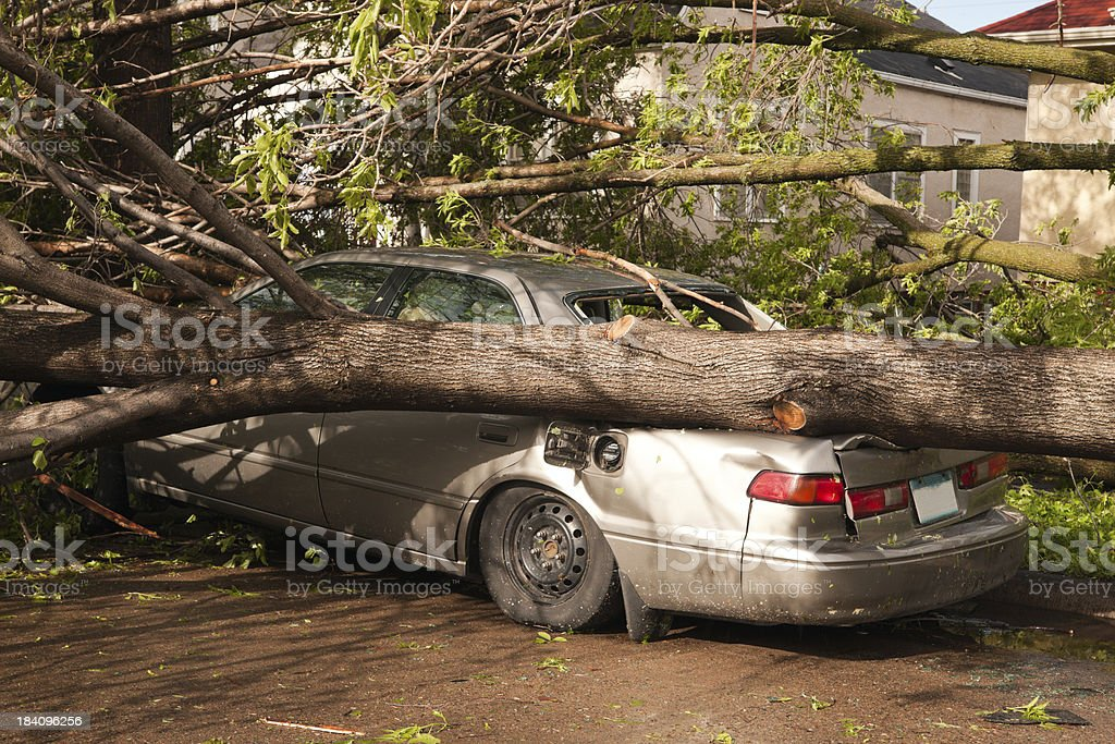 Fallen trees on vehicle after tornado. stock photo