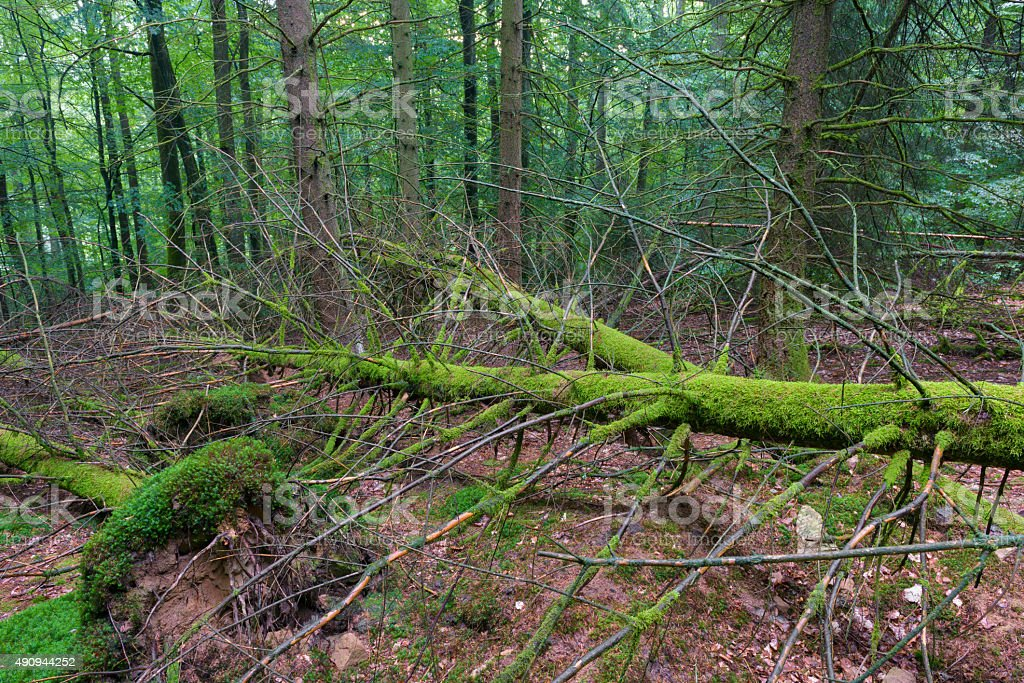 Fallen trees stock photo