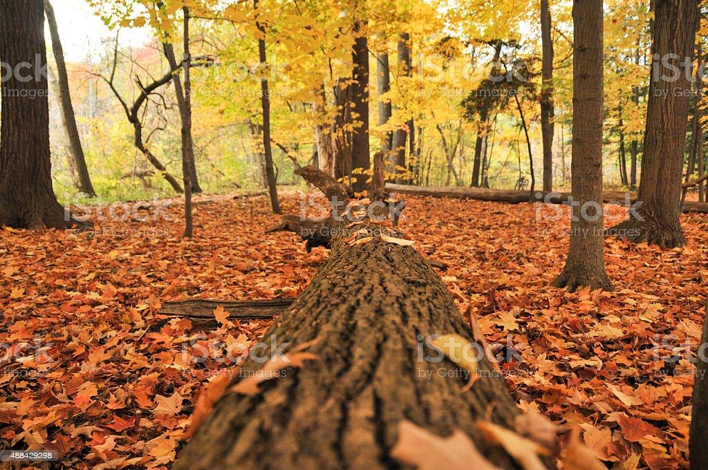 fallen trunk on fall stock photo