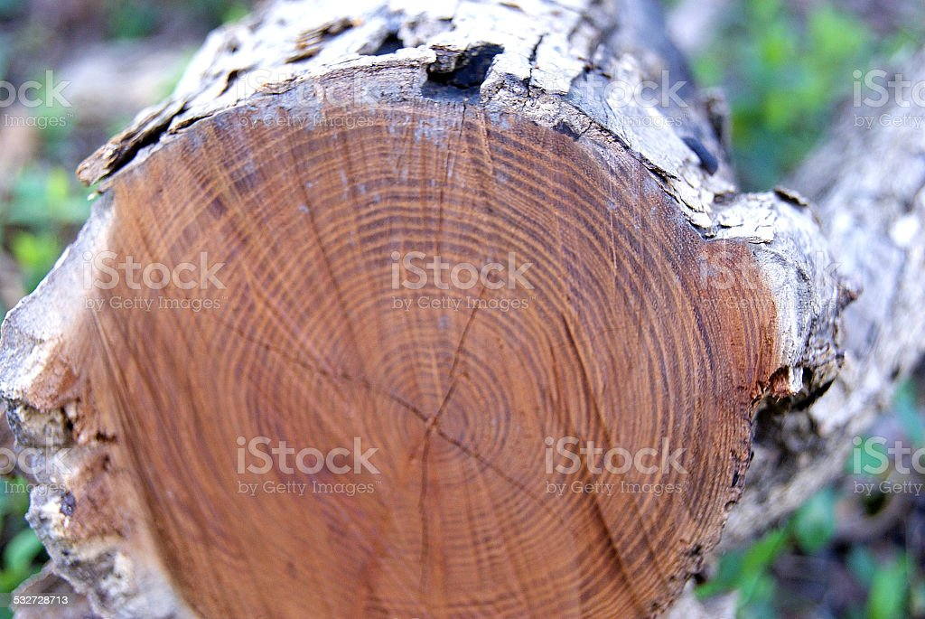 Fallen Trunk royalty-free stock photo