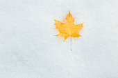 Fallen yellow maple leaf on the snow. Winter background.