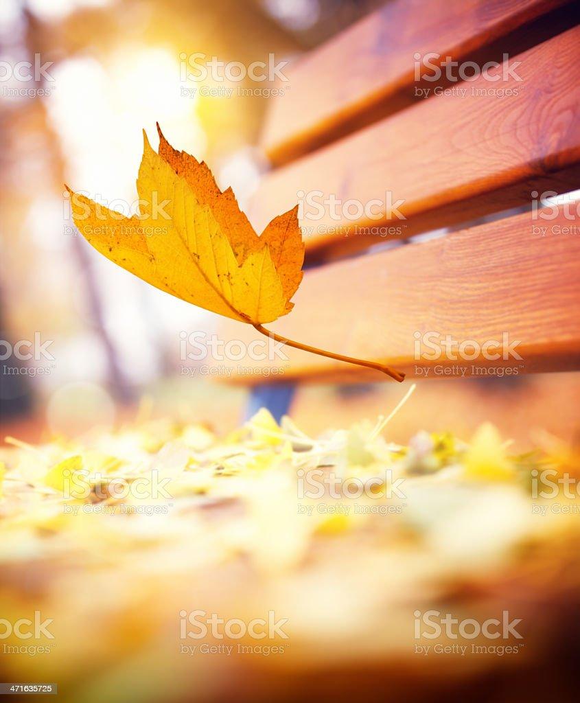 Falling  Autumn Leaf royalty-free stock photo