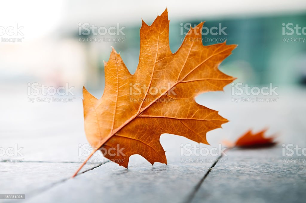 Falling Autumn Leaves On City Streets stock photo