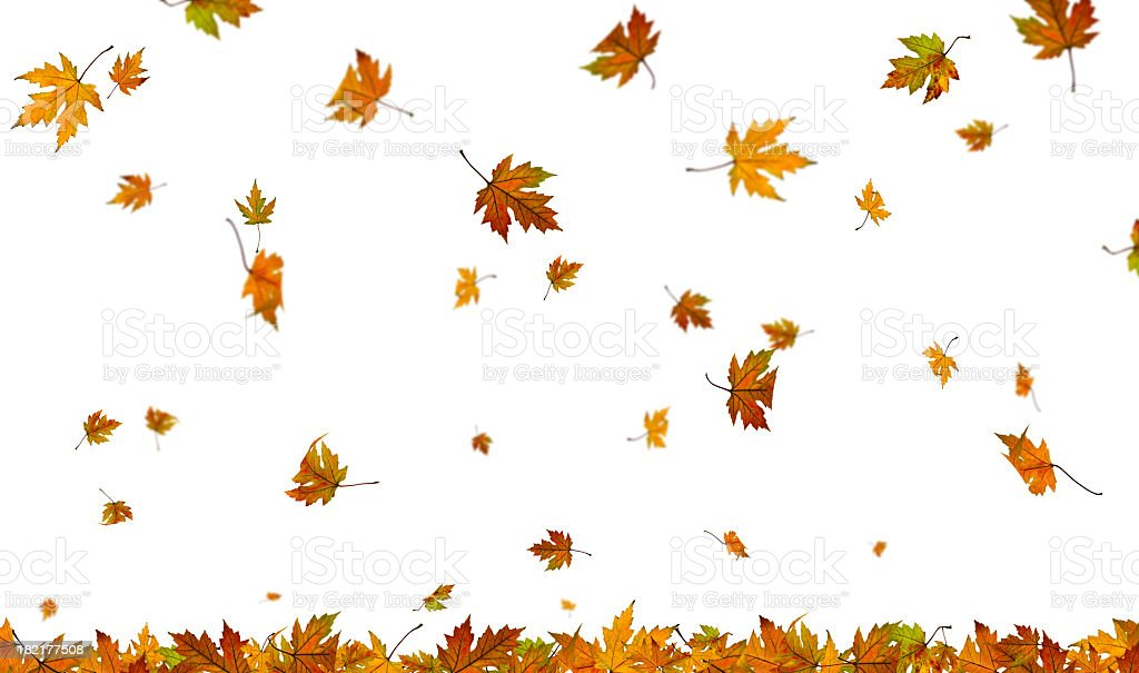 Falling autumn leaves on plain white background stock photo