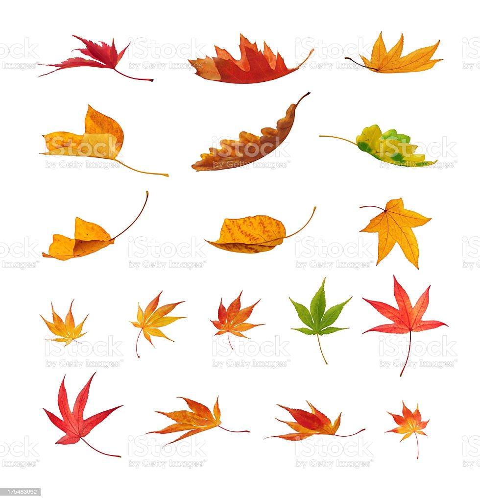 Falling Autumn Leaves On White Background stock photo