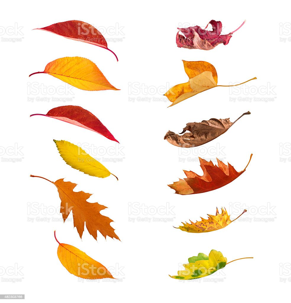 Falling Autumn Leaves On White Background stock photo