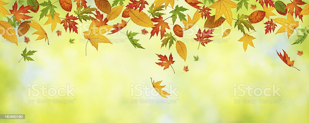Falling Autumn Leaves (Panoramic) royalty-free stock photo