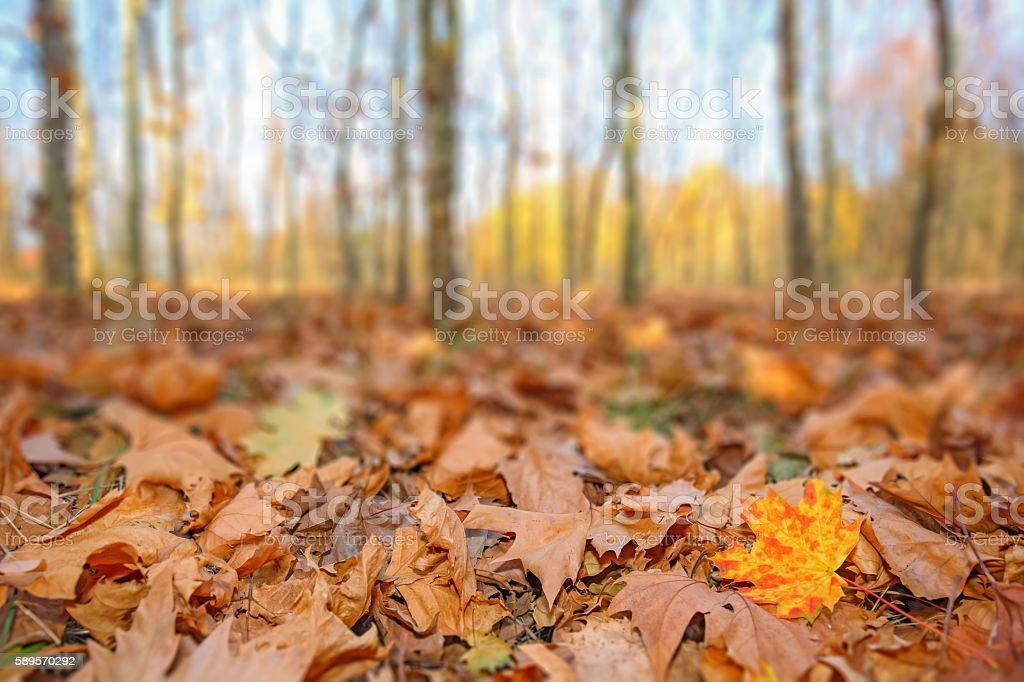 Falling Autumn Leaves stock photo