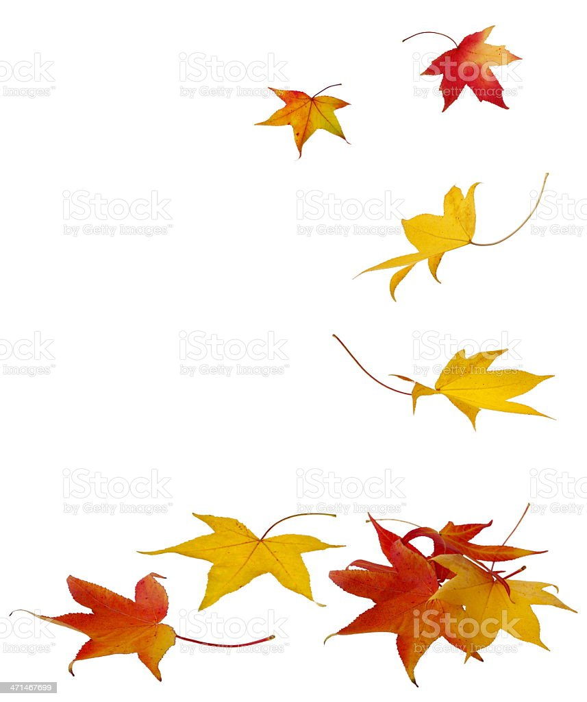 Falling Autumn Leaves - XXXL stock photo