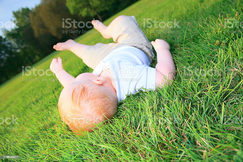 Falling Baby Grass royalty-free stock photo