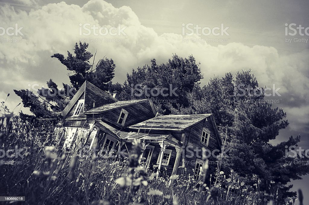 Falling down old farm house in yellow flower field royalty-free stock photo