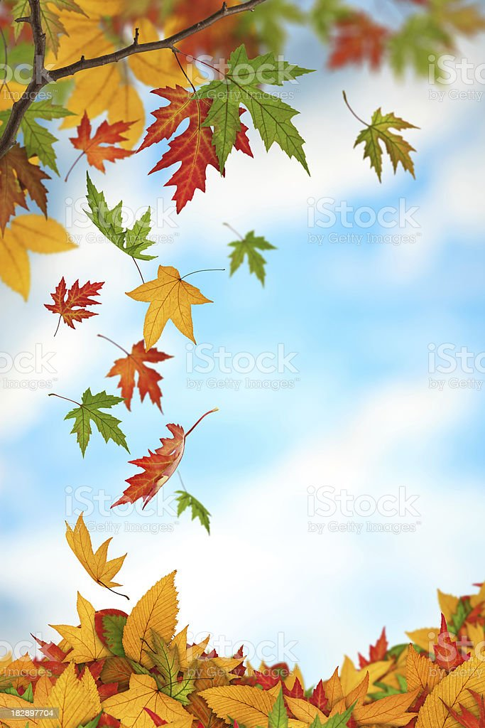 Falling From The Trees royalty-free stock photo