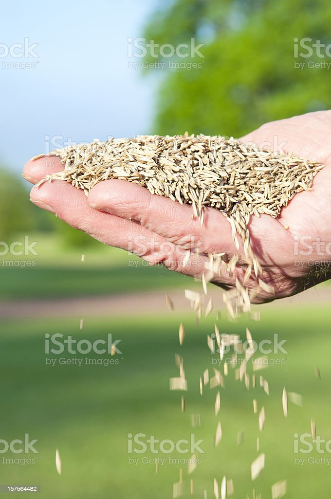 Falling Grass Seed royalty-free stock photo