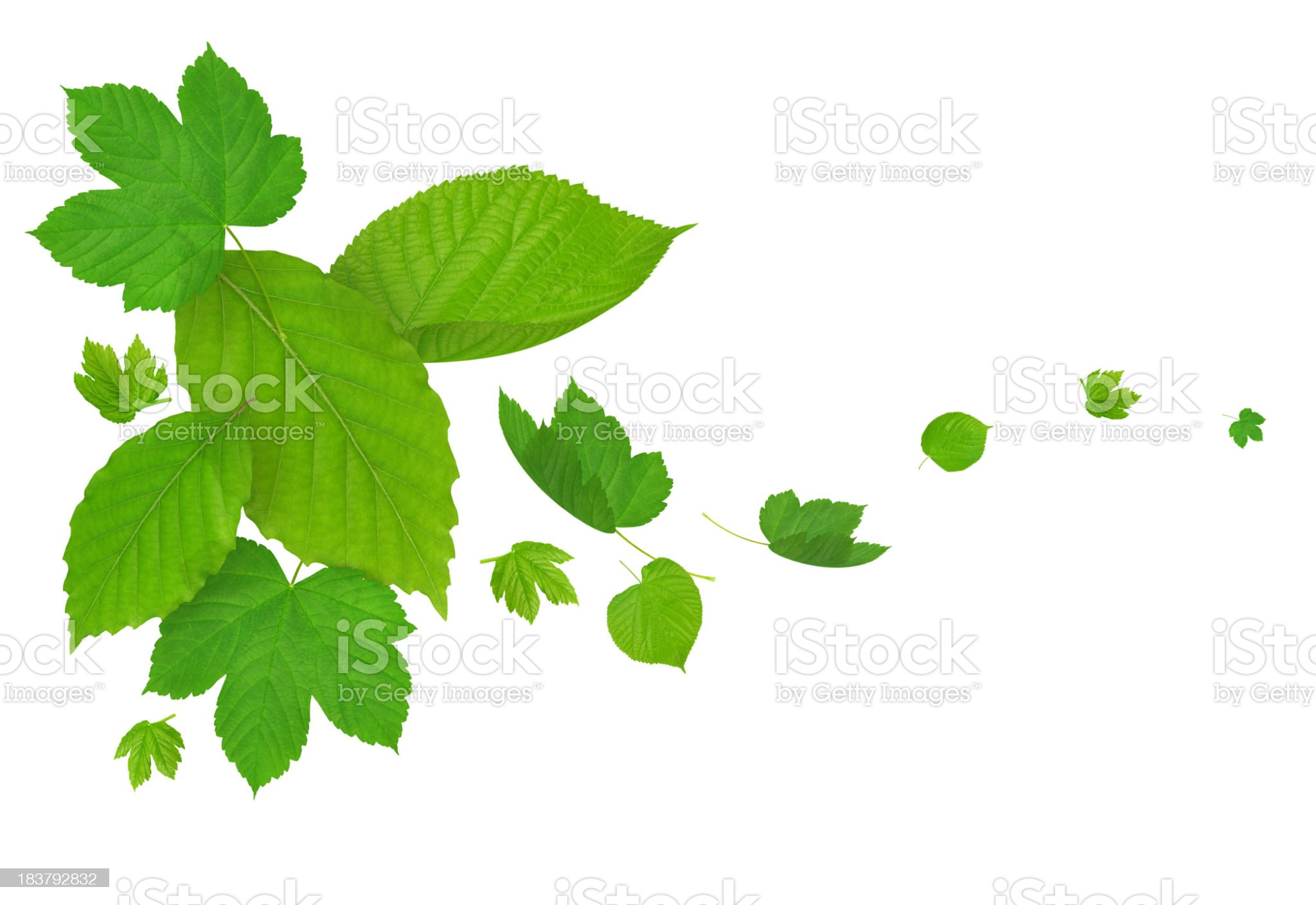 Falling Green Leaves royalty-free stock photo