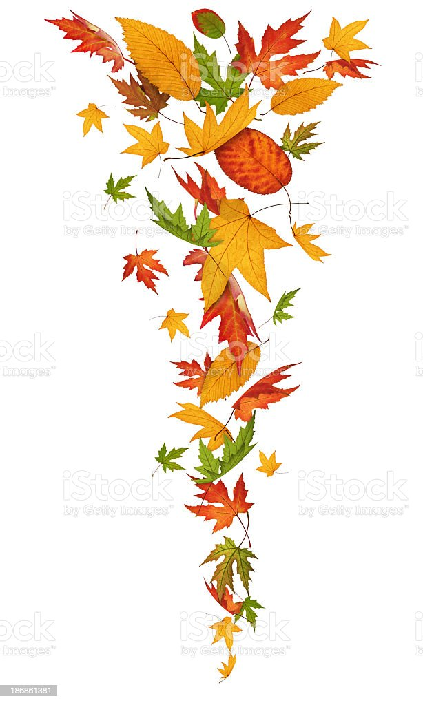 Falling Isolated Leaves royalty-free stock photo