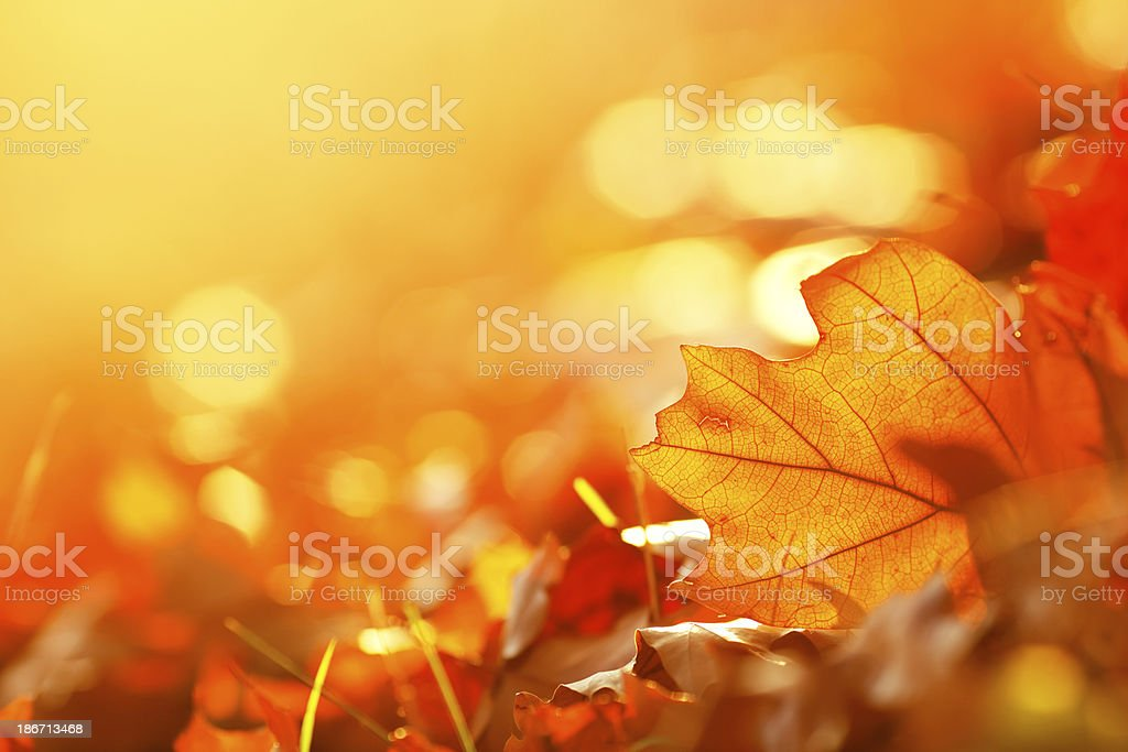 Falling Leaf Frame stock photo