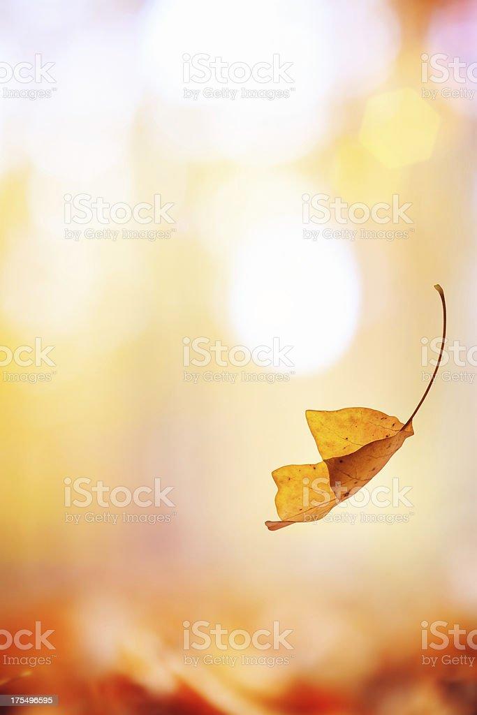 Falling Leaf royalty-free stock photo