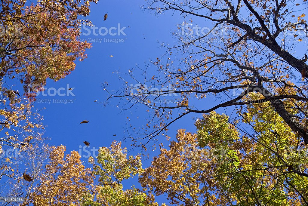 Falling Leaves in Color royalty-free stock photo