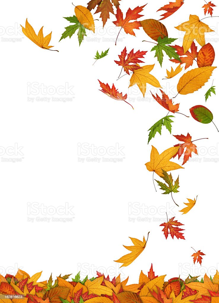 Falling Leaves On White Background royalty-free stock photo