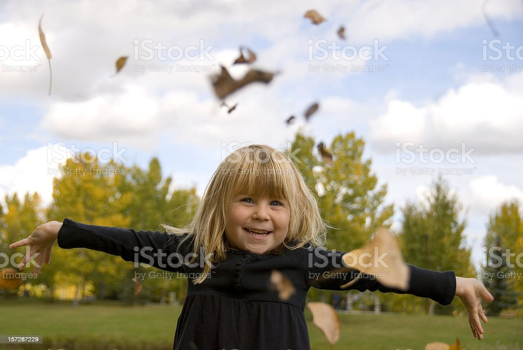 Falling Leaves royalty-free stock photo