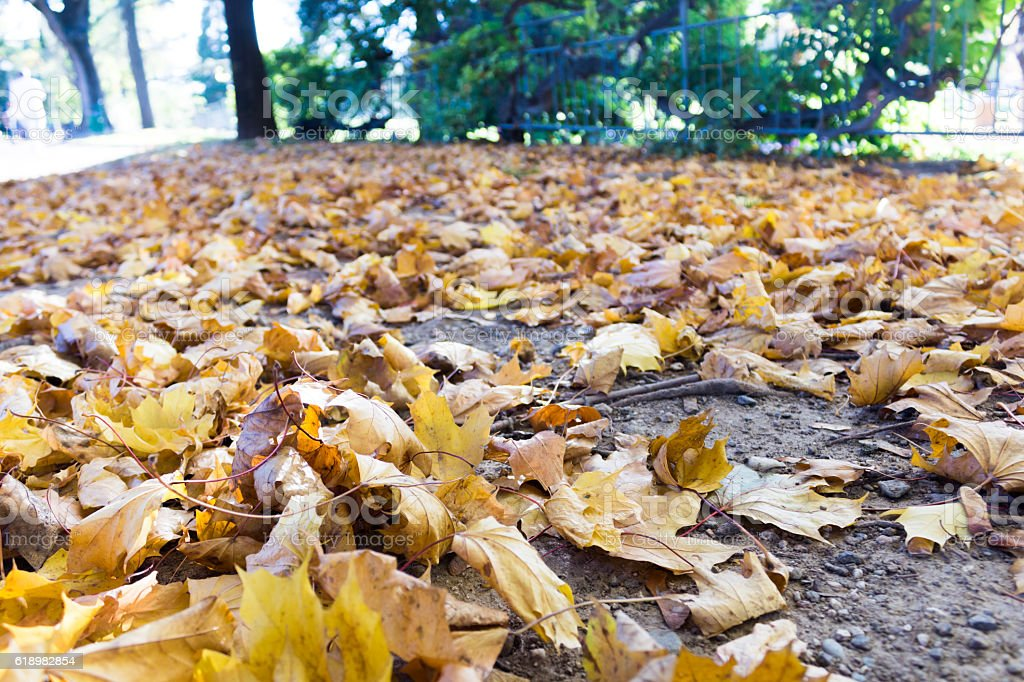 Falling leaves stock photo