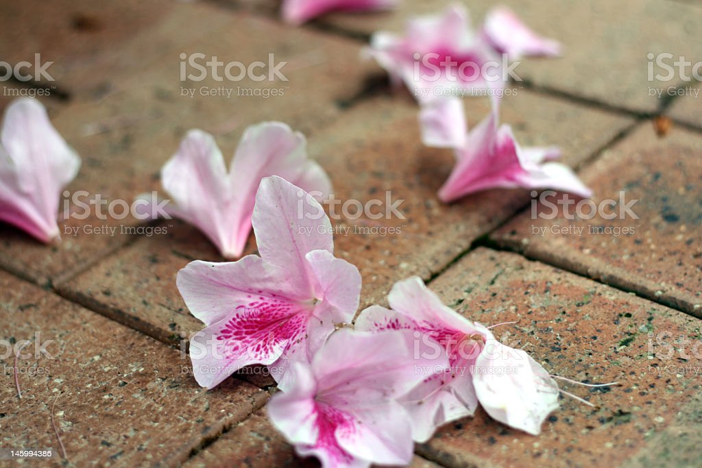 Falling of Flower royalty-free stock photo