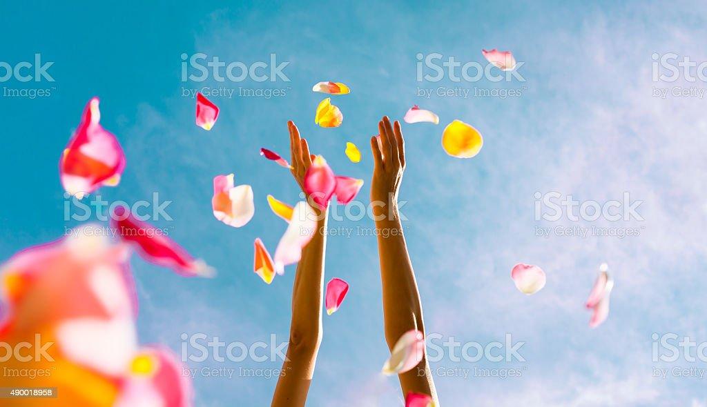 Falling petals stock photo