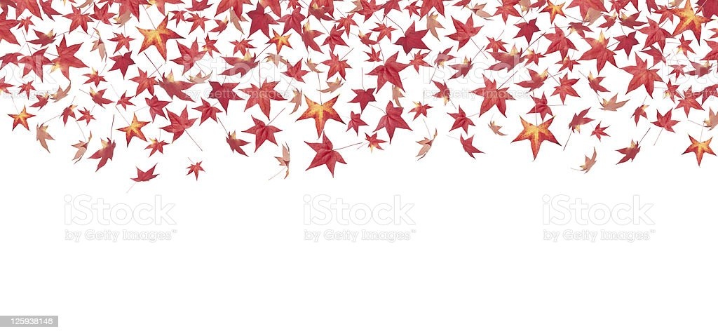 Falling red autumn leaves royalty-free stock photo