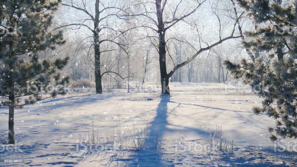 Falling snow in a winter park with snow covered trees stock photo