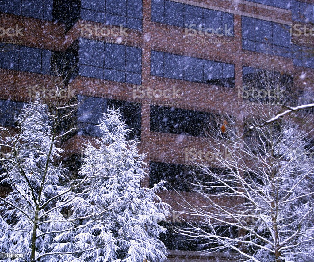 Falling Snow royalty-free stock photo