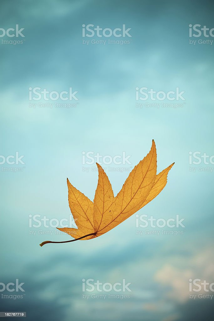 Falling Yellow Autumn Leaf royalty-free stock photo