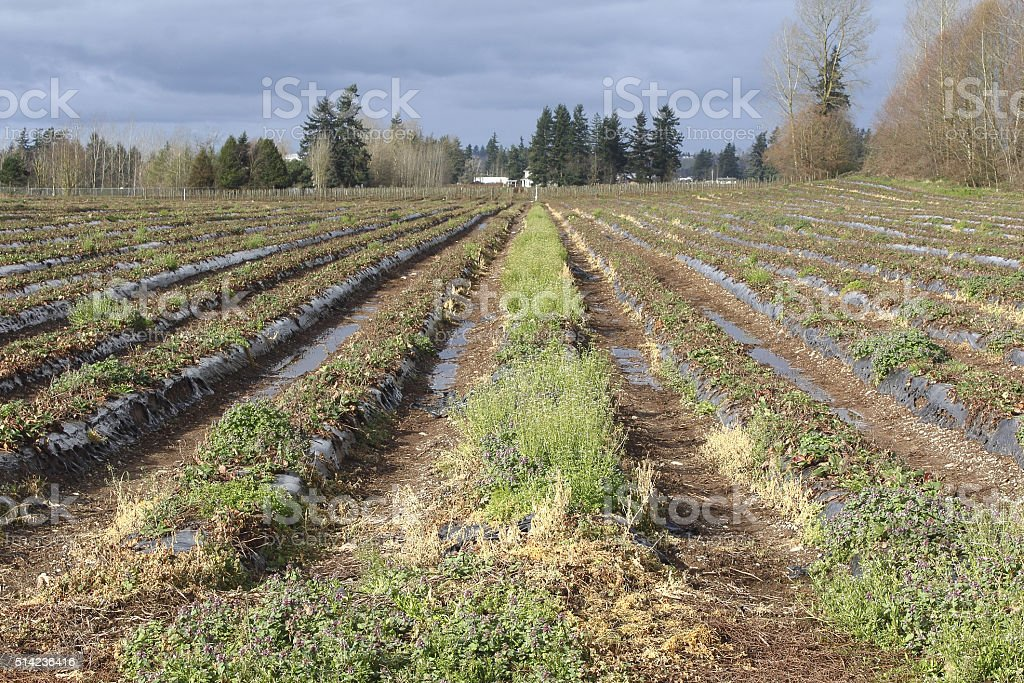 Fallow Agricultural Land stock photo