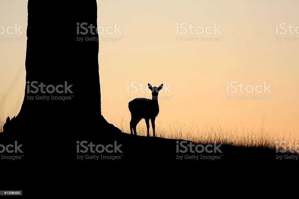 Fallow doe silhouette royalty-free stock photo