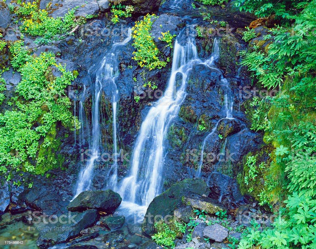Falls Creeks Falls in Mt. Rainier National Park stock photo