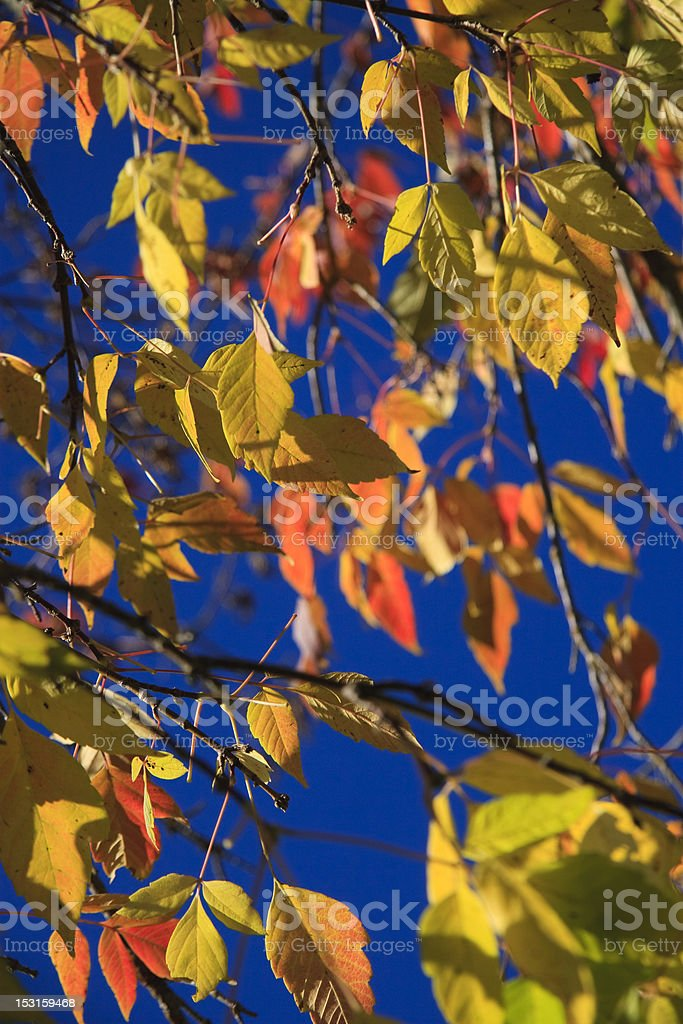 Fall's  Leaves stock photo