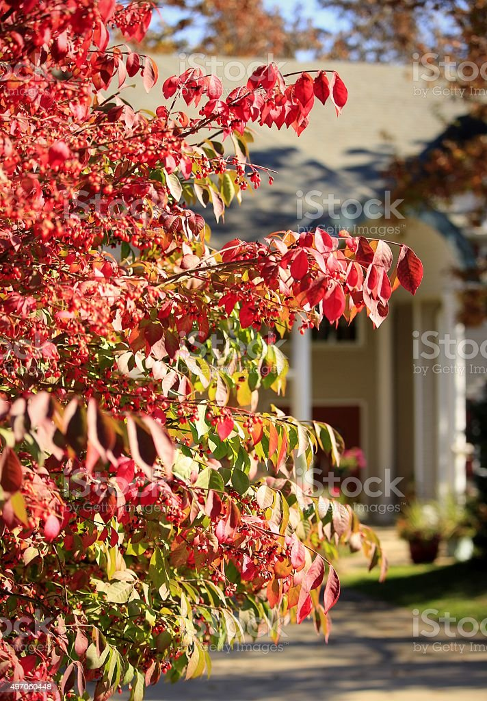 Fall's Red stock photo