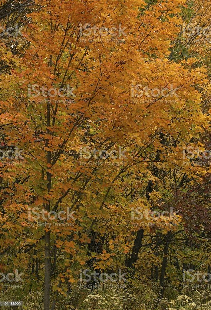 Fall's trees stock photo