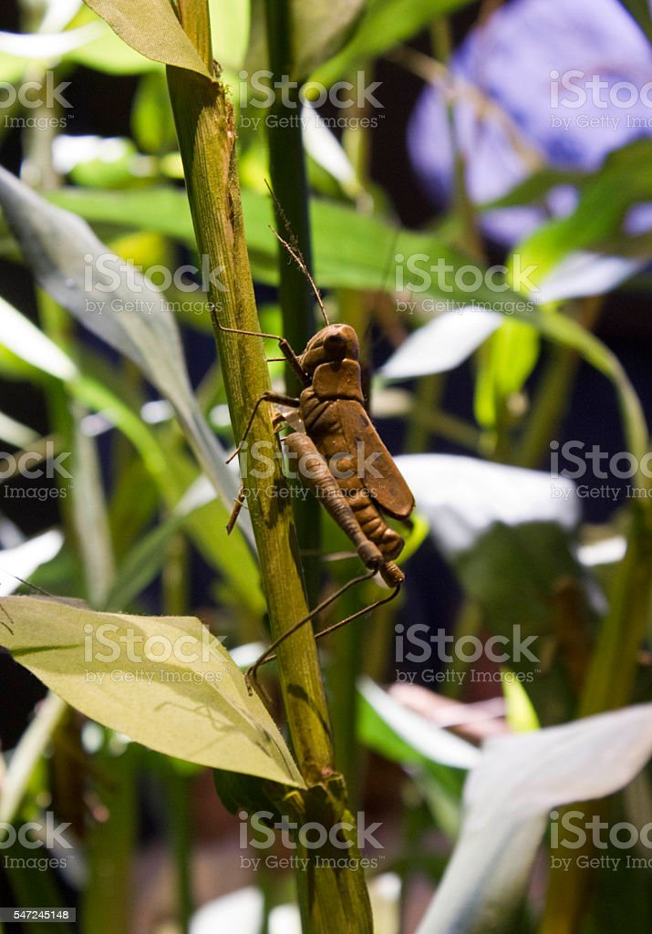 False grasshopper stock photo