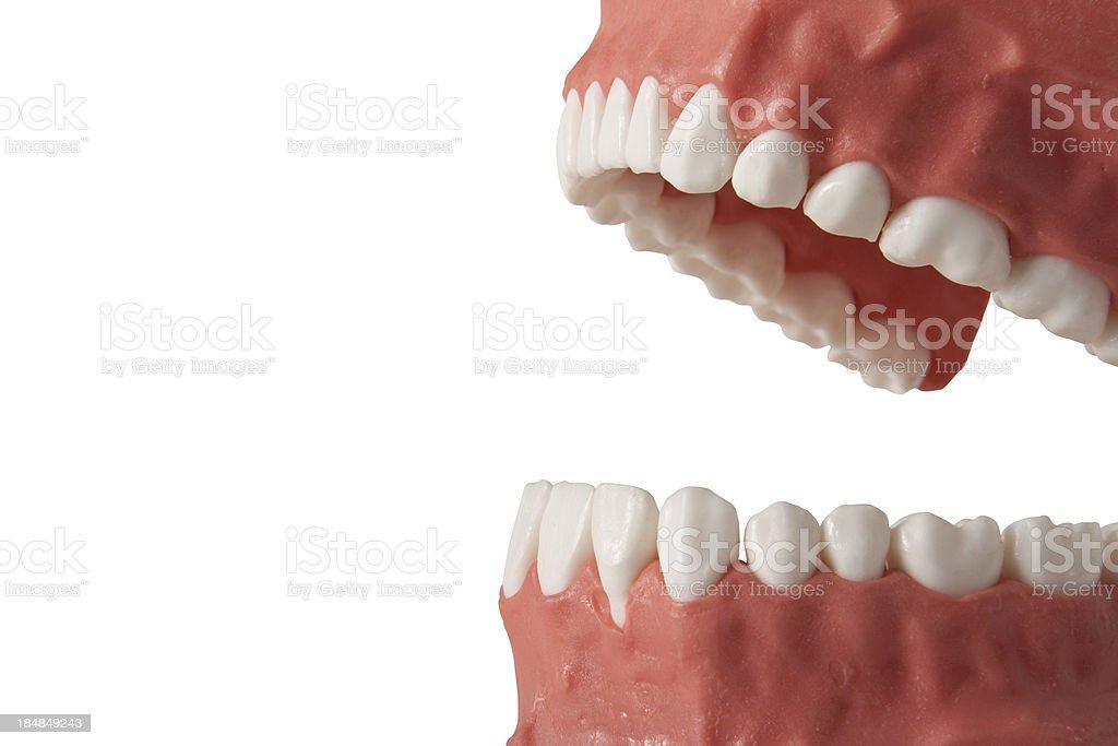 False teeth royalty-free stock photo