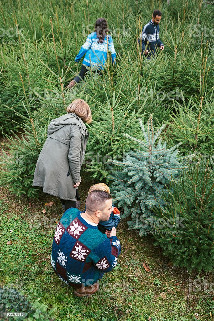 Families Choosing A Christmas Tree stock photo