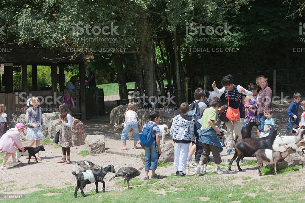 Families in petting zoo stock photo