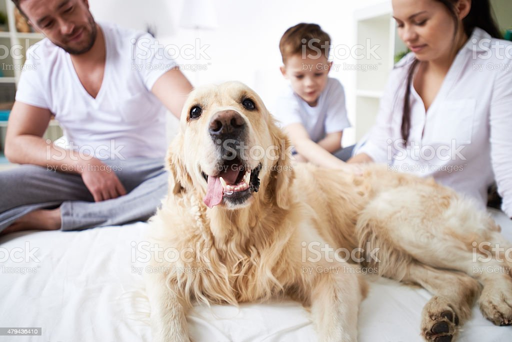 Family and their dog stock photo