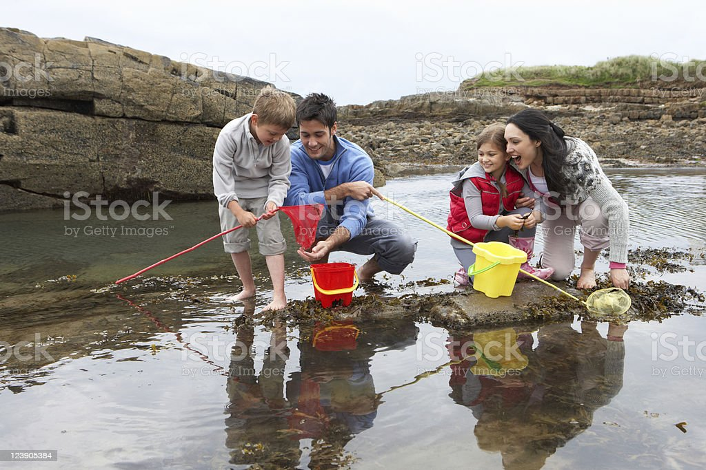 Family at the beach collecting shells in the tide royalty-free stock photo