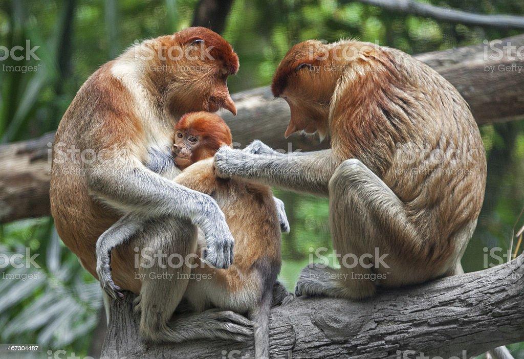 Family Care Proboscis royalty-free stock photo