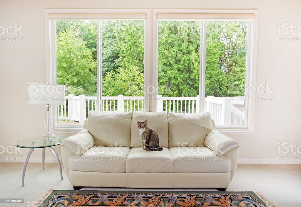Family cat enjoying sofa within living room stock photo