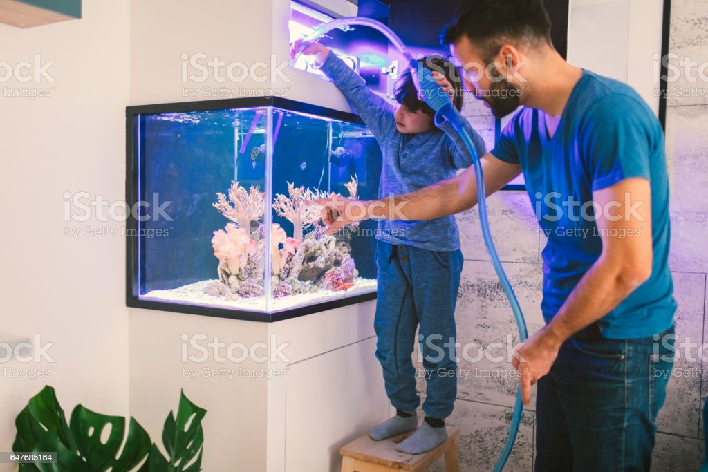 Family cleaning reef tank stock photo