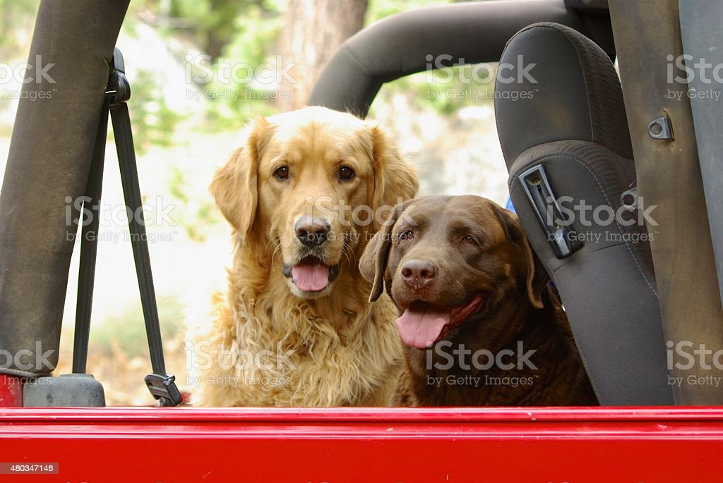Family Companions - Dog Friends stock photo